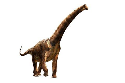 Futalognkosaurus (FOO-tah-LONG-koh-SAWR-uss)