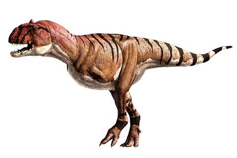 Majungasaurus (mah-JUNG-ah-SAWR-uss)
