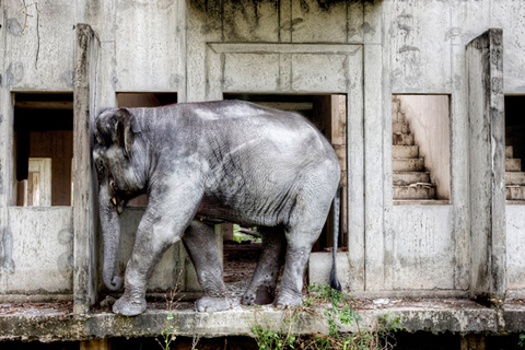 "What intrigues Lewin is the difference between how elephants are perceived in Thailand and how many of the animals are now treated. ""It's a really tragic story that needs to be told,"" he says."