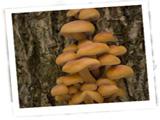 mushrooms160