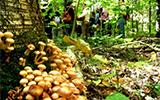 mushroom_160