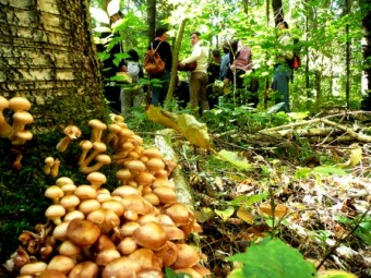 mushroom_full