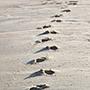 footprint_90