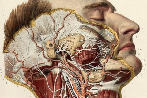 Thomas Fisher Rare Book Library: Anatomia collection