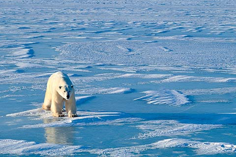 Arctic temperatures could rise by between two and eight degrees by the end of the century. Photo: istock