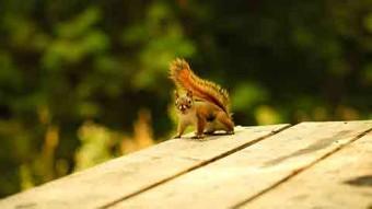 Squirrel_480