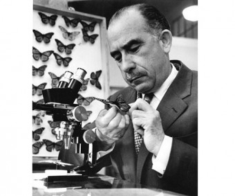 Fred Urquhart persisted until he found a method of tagging butterflies that would work. Photo: Courtesy U of T Archives