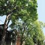 f-UT1509-City-16-trees_PJ_90