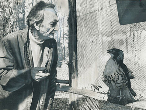 Photo of Roy Ivor Hall with falcon