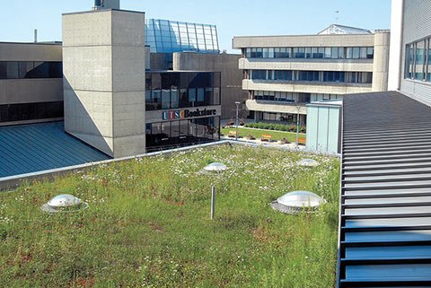 Photo of grass on top of UTSC building roof