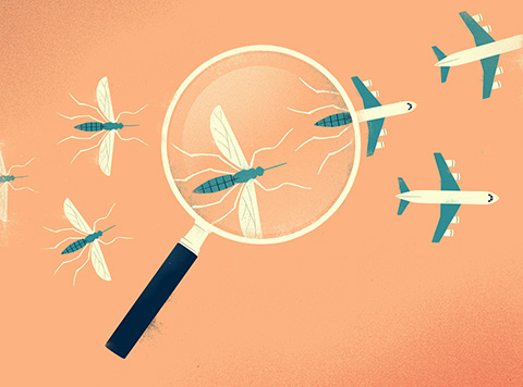 Illustration of a magnifying glass magnifying a mosquito, with mosquitoes on the left of the glass transforming into airplanes on the right.