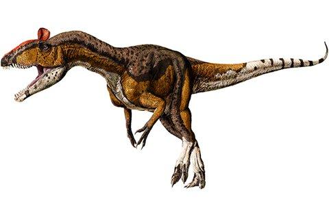 Cryolophosaurus (cry-oh-loaf-oh-SAWR-uss)