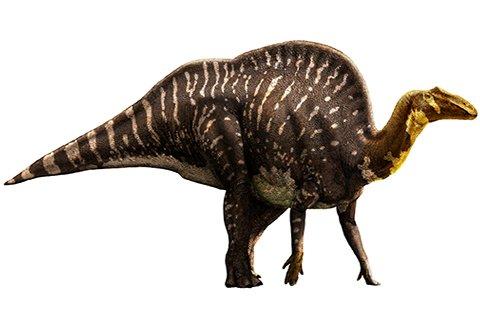 Ouranosaurus (oo-RAN-owe-SAWR-uss)
