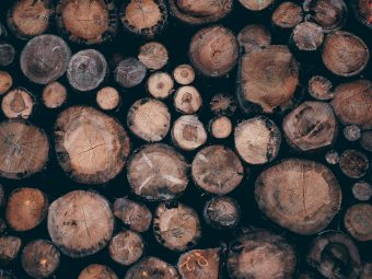 Photo of logs