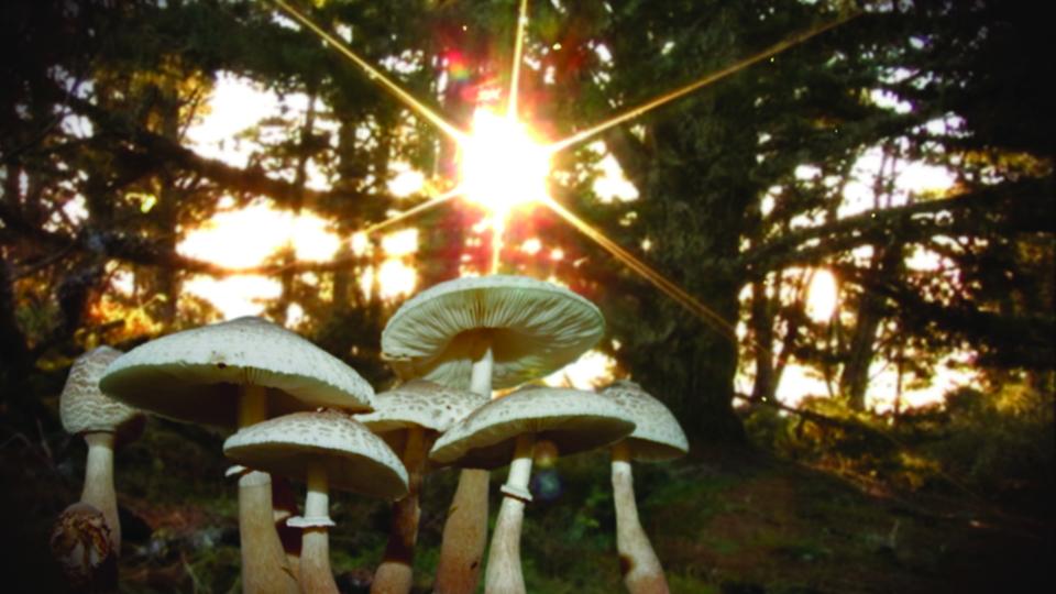 Fungi Magic