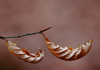 Photo of wilting leaves