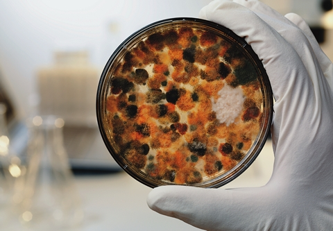 Image of a petrie dish with fungus in it