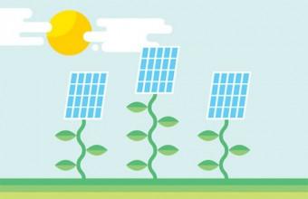 Illustration of the sun shining down on solar panels on vines/stalks.