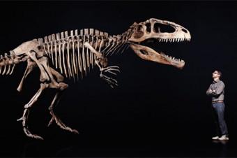 """Prof. David Evans stares down a Giganotosaurus"