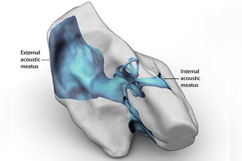 A 3D model of a body part.