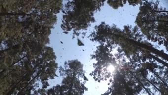 Photo: screenshot from IMAX film Flight of the Butterflies