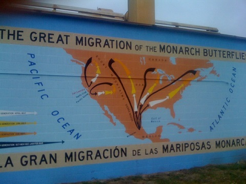 Mural of the butterfly migration routes, in San Leandro, California. Photo: Alec Scott.