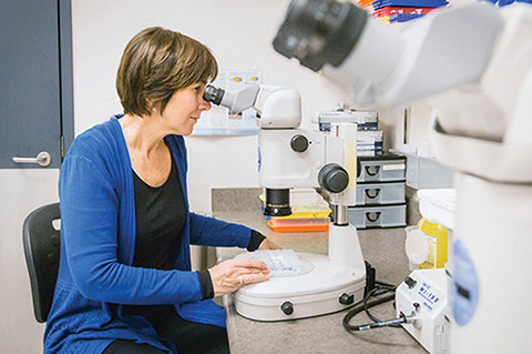 Photo of Prof. Cheryl Arrowsmith looking into a microscope
