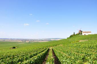Photo of a green farm field.