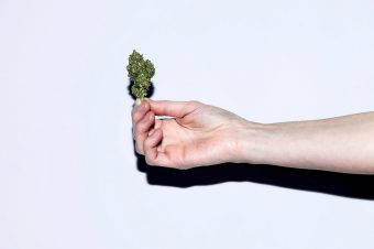 Woman's hand holding a bud of Cannabis
