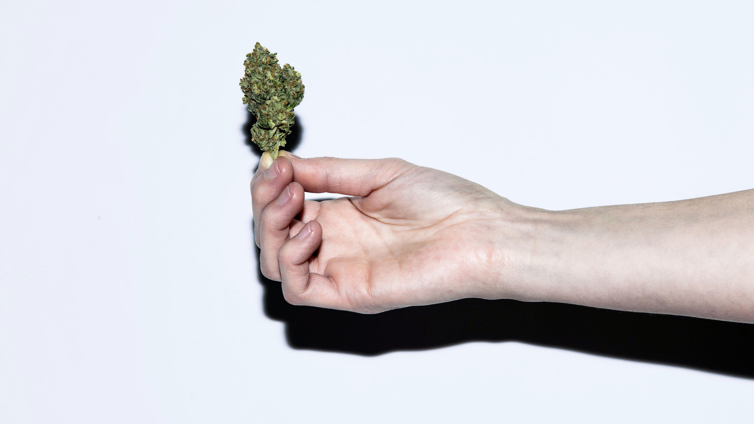 Woman's hand holding a bud of Cannabis.