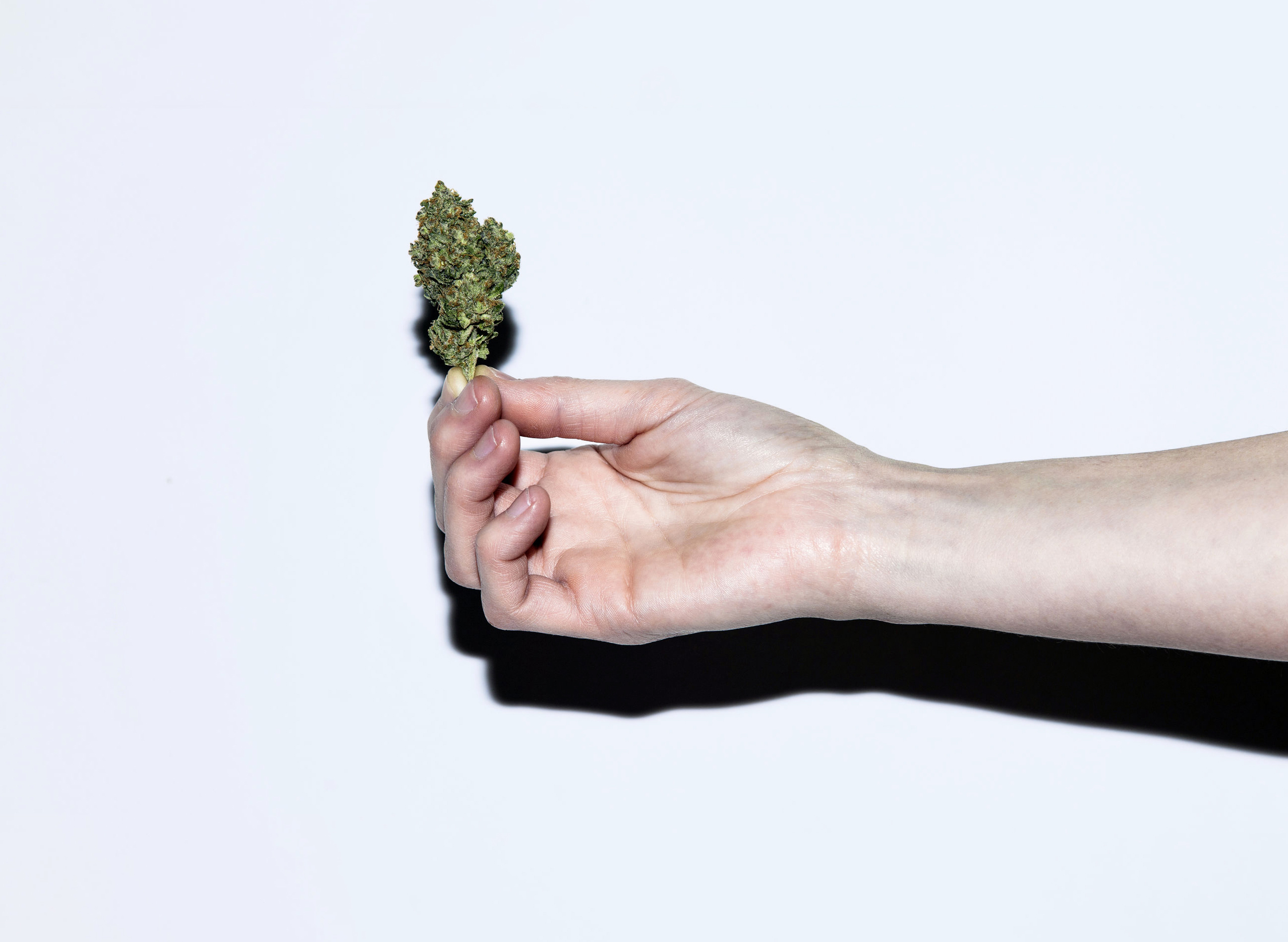 Photo of a hand holding a cannabis bud.