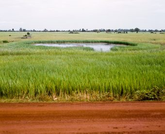Dirt road, grassy field and a pond in the distance