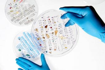 Three petri dishes containing microplastic samples