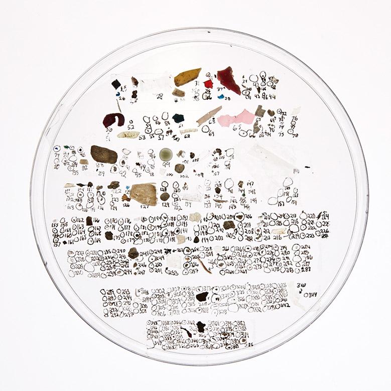 Petri dish containing microplastics