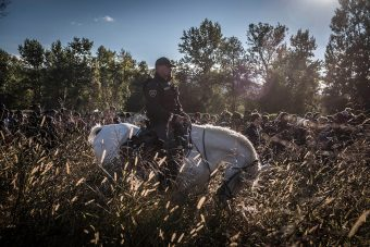 A uniformed policeman is sitting on a white horse that is grazing among shrubs. A line of migrants walk in the background, half concealed by the shrubs.