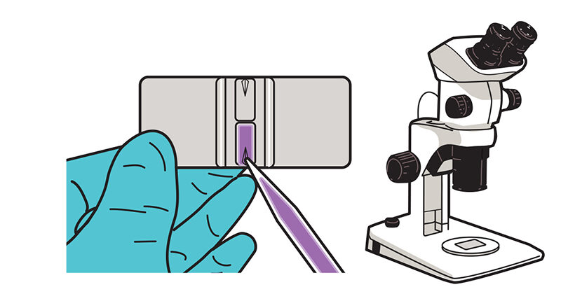 A solution being added to a slide on the right, and a microscope on the left